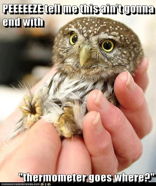 baby animals,worried,owls,butts,where,thermometer