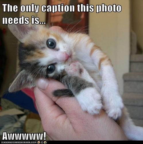 The only caption this photo needs is... Awwwww!