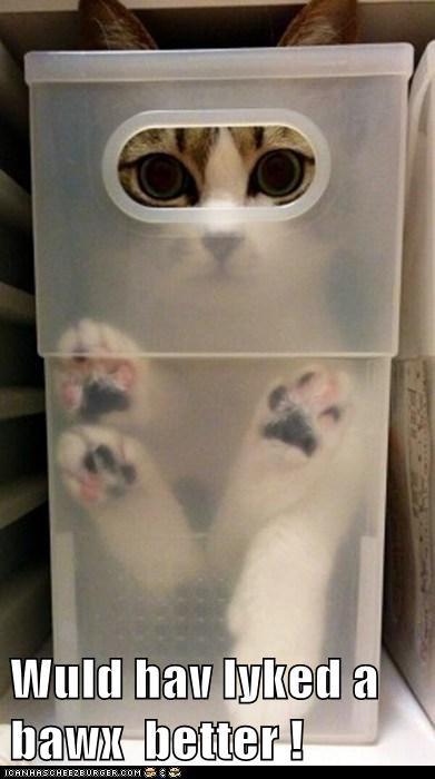 bin box Cats - 7052499712
