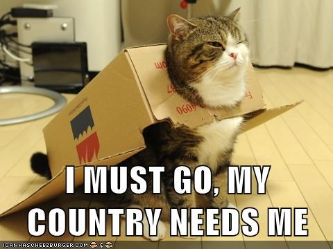 box cat maru funny hero - 7052503040