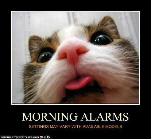cat,demotivational,alarm,funny,morning