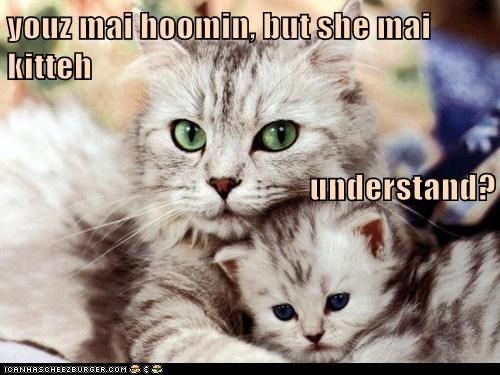 kitten human mom Cats - 7052625152