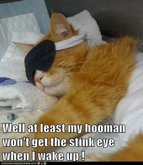 Well at least my hooman won't get the stink eye when I wake up !