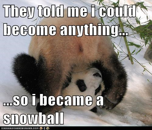 they said i could be anything snowball rolling panda bears