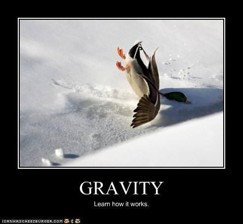 crashing snow falling ducks Gravity - 7052733184