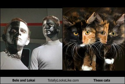 lokai TLL bele Star Trek Cats