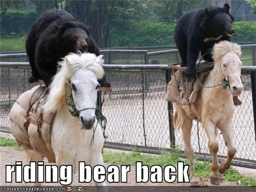 bareback bears puns riding horses - 7052970752