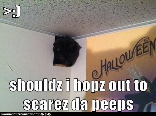 >:)  shouldz i hopz out to scarez da peeps