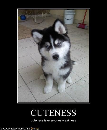CUTENESS