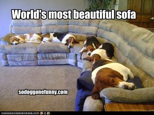 World's most beautiful sofa sodoggonefunny.com