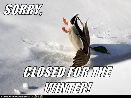 crashing,ducks,pond,closed,sorry,frozen