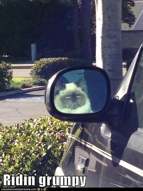 song cars grumpy Cats - 7053322752