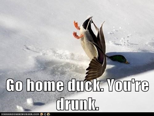 go home you're drunk,flying crashing,ducks,ice