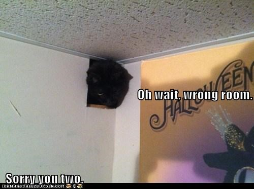 cat ceiling wall funny - 7053688064