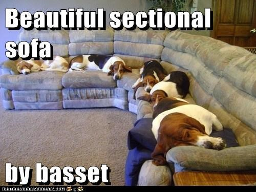 furniture,dogs,couch,basset hounds,sofa,sleeping