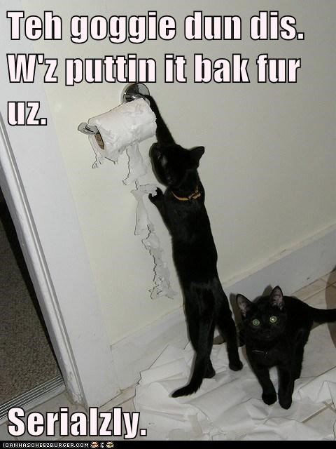 cat naughty blame tissue funny - 7054564864