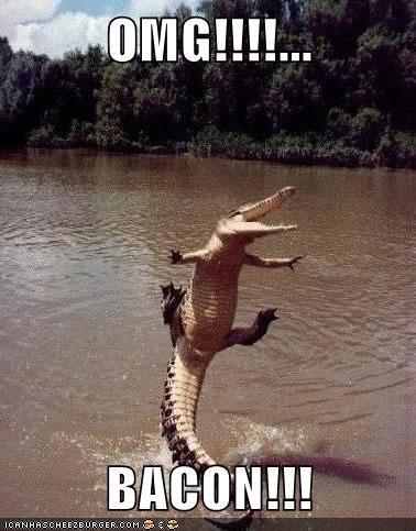 aligators happy bacon omg jumping - 7054799616
