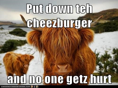 Cheezburger Image 7054807040