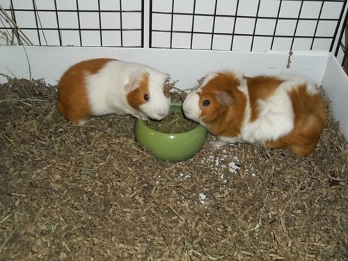 Charlie and Linus enjoying lunch