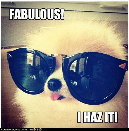 dogs sunglasses fabulous pomeranians - 7055213312