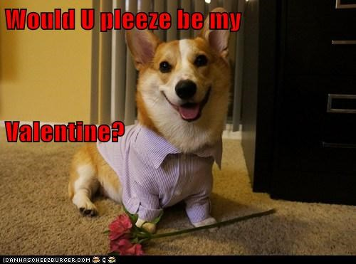 dogs,corgi,flowers,dating,Valentines day
