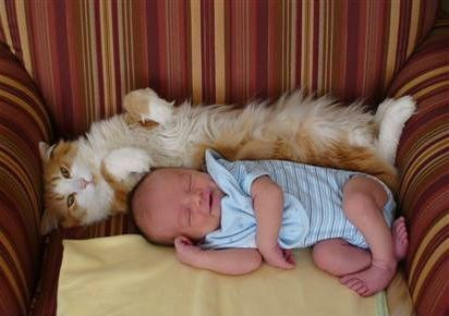 Babies daww nap time Cats - 7055329536