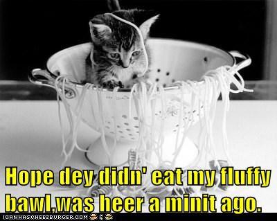 Hope dey didn' eat my fluffy bawl,was heer a minit ago.