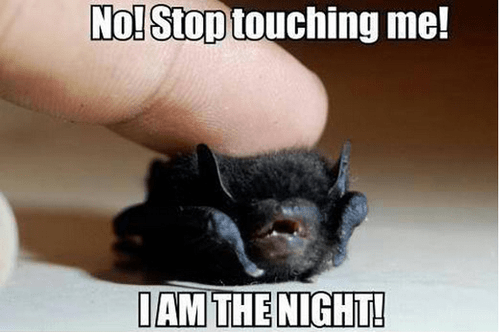 bat darkness tiny pet tough touch - 7055373824