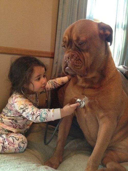dogs medicine vet veterinarian stethoscope