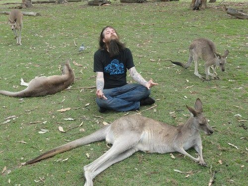 kangaroos meditation - 7055463168