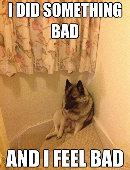 dogs bad dog sitting what breed guilty