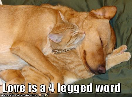 dogs hugs love Cats - 7055942400