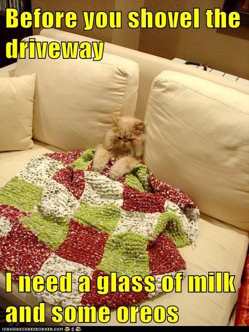 cat blanket funny - 7056110336
