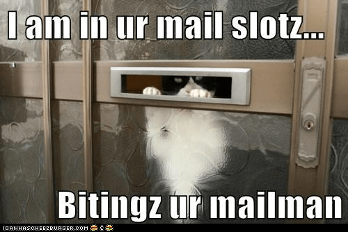 catnip,human,Cats,mail