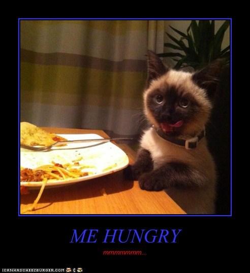 Cheezburger Image 7056239872