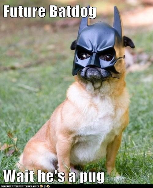 Future Batdog  Wait he's a pug