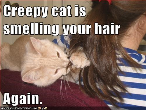 hair cat creepy funny