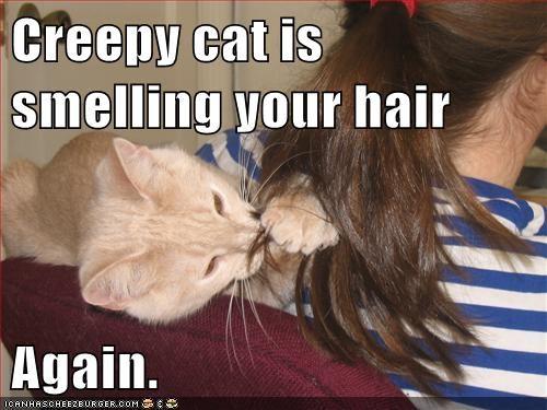 hair cat creepy funny - 7056393728