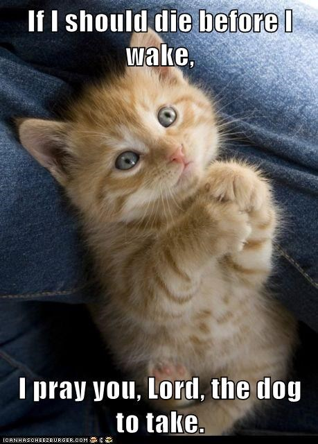 kitten kitty prayer dogs funny - 7056414208