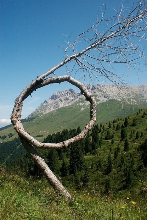 nature loop landscape tree - 7056635392