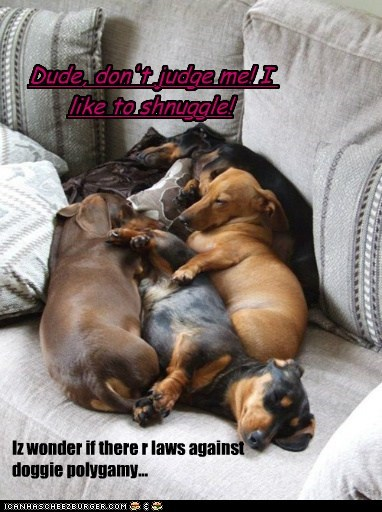 Iz wonder if there r laws against doggie polygamy... Dude, don't judge me! I like to shnuggle!