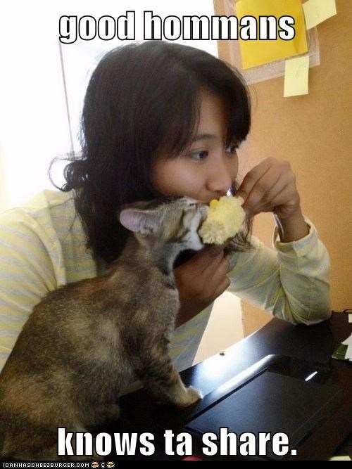 share human food Cats - 7056883456