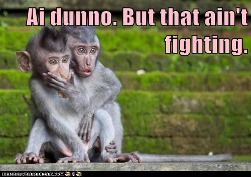 monkeys confused fighting watching