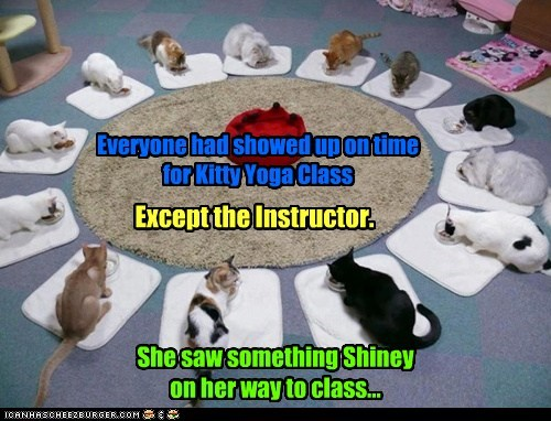 Everyone had showed up on time for Kitty Yoga Class Except the Instructor. She saw something Shiney on her way to class...