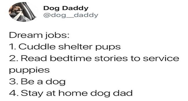dogs dog memes funny memes Memes - 7057925