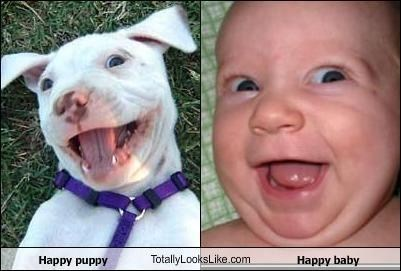 Babies,dogs,totally looks like