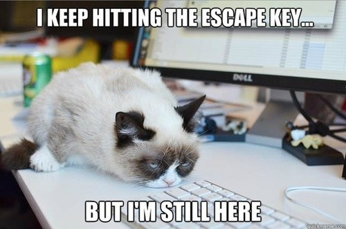 escape key,still here,monday thru friday,g rated