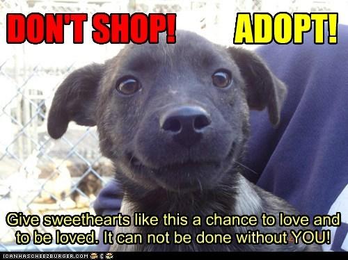 DON'T SHOP! ADOPT!!!