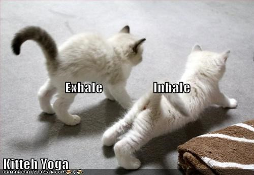 kitten cute kitty yoga - 7058622720