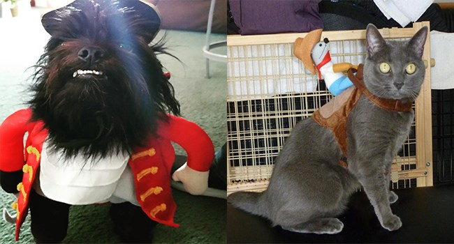 halloween costumes adorable user pets user submitted halloween cute - 7058693